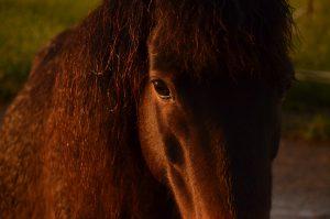 Skyros Island Horse Trust - Katsarelias Simpson Stud