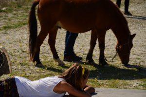 ImpreSkyros Island Horse Trust - Katsarelias Simpson Studssionen Skyrenische Pferd